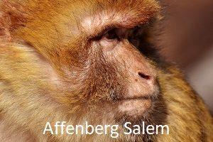 Ausflugsziel Affenberg