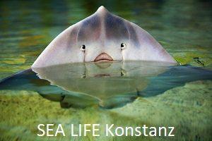 Ausflugsziel - SEA LIFE KONSTANZ