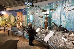 Naturkundemuseum - Besuch Sea Life Konstanz